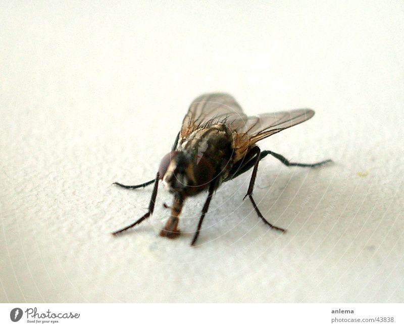 Fliege Ärger