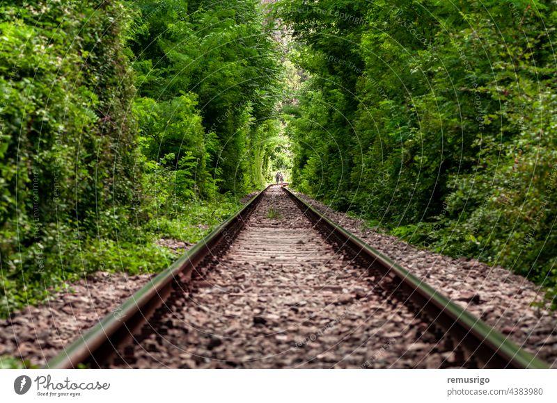 Ein natürlicher Liebestunnel, der durch Züge gebildet wird, die die Äste der Bäume abschneiden. Grünes Laub. Unerkennbare Menschen 2016 Rumänien Vadu Crisului