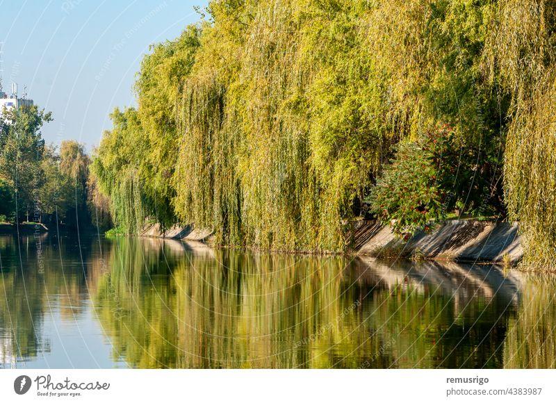 Ein Blick auf den Fluss Bega am frühen Morgen bei strahlend blauem Himmel 2016 Rumänien Timisoara Hintergrund Großstadt Stadtbild Tag Landschaft natürlich Natur