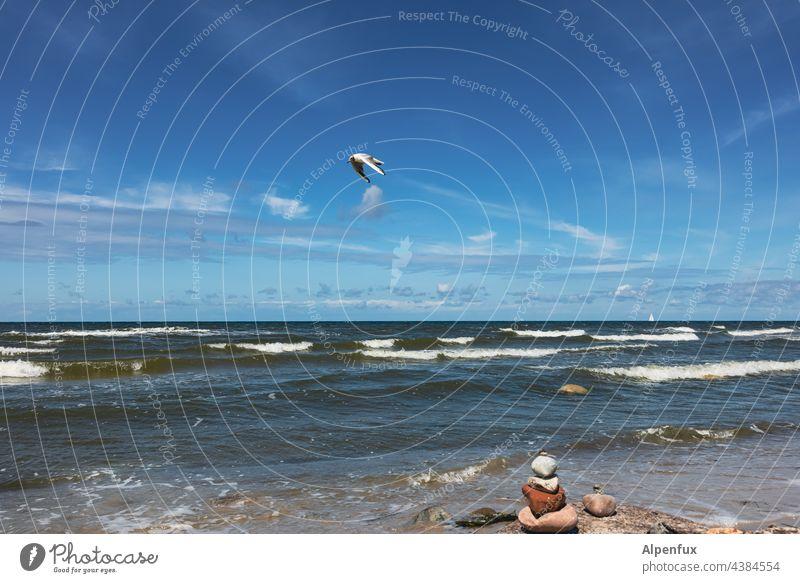 schöner Tag am Meer-   Steine trotzen den Wellen -     Möwe fliegt vorbei. Wasser Himmel fliegen Möve Ostsee ostseeküste Küste Natur Urlaub