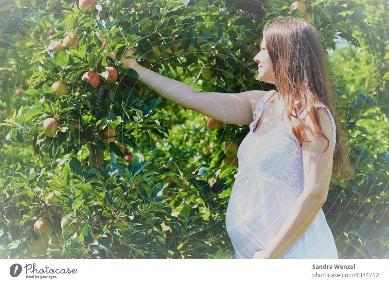 Schwangere Frau pflückt Apfel Umstandsmode Schwangerschaft Ernährung Babybauch Bauch gesund Obst andere Umstände lange Haare Natur natürlich