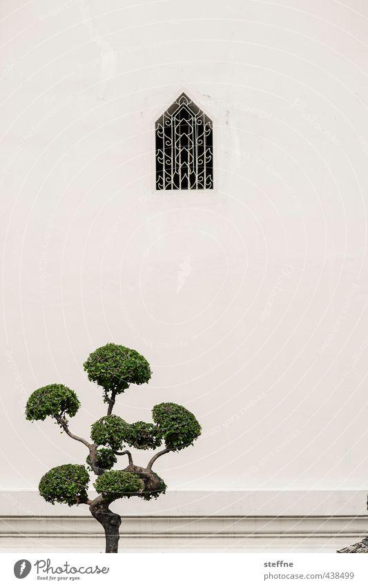 Weihnachtsbaum, Bangkok-Style Baum Fassade Fenster ästhetisch ruhig Bonsai Meditation Kloster harmonisch Farbfoto Textfreiraum oben Textfreiraum Mitte