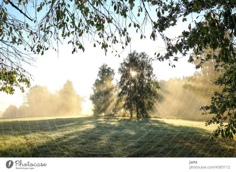 Sonnenaufgang  auf einer Wiese am Waldrand Sonnenstrahlen Licht Sonnenlicht Baum Sonntag Außenaufnahme Natur Farbfoto Landschaft Menschenleer Umwelt Gegenlicht