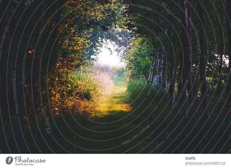 Sommerwald. Unter dem Blätterdach tiefer Schatten. Das Licht wartet schon. Haiku Waldrand Licht im Wald Lichteinfall Waldweg Waldpfad verzaubert Waldlichtung