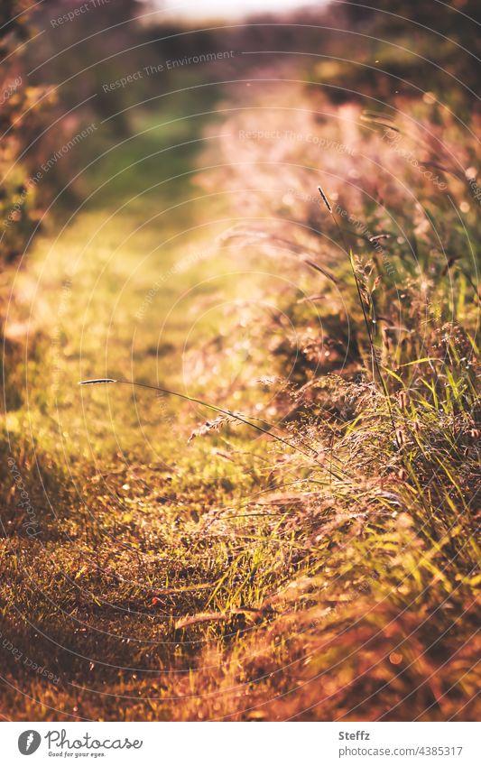 Ein Sommerpfad. Gräser beugen sich tiefgelb. Es ist warm. Pfad Fußweg Haiku Weg Sommerlicht warmer Sommertag Hitze Sommermüde Juni Sommerfarben sonnig