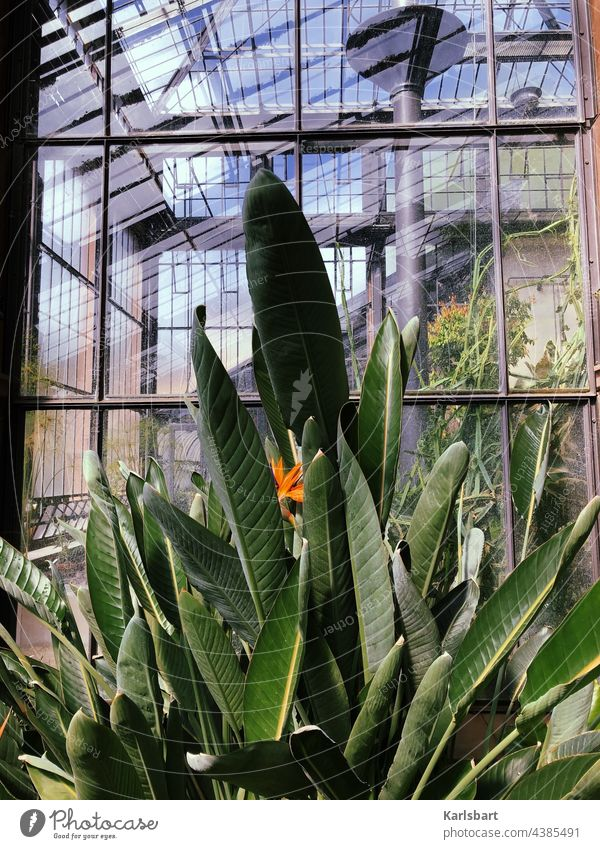 Naturschutz Naturschutzgebiet Umwelt Menschenleer Landschaft Pflanze grün Freiheit Naturerlebnis Pflanzen pflanzlich Botanik botanisch Botanischer Garten flora