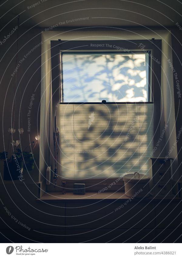 Schattenspiel im Fenster Baumschatten Licht Sonnenlicht Lichtspiel Baum Schatten Lichteinfall Angenehmes Licht Sanftes Licht Farbfoto Innenaufnahme