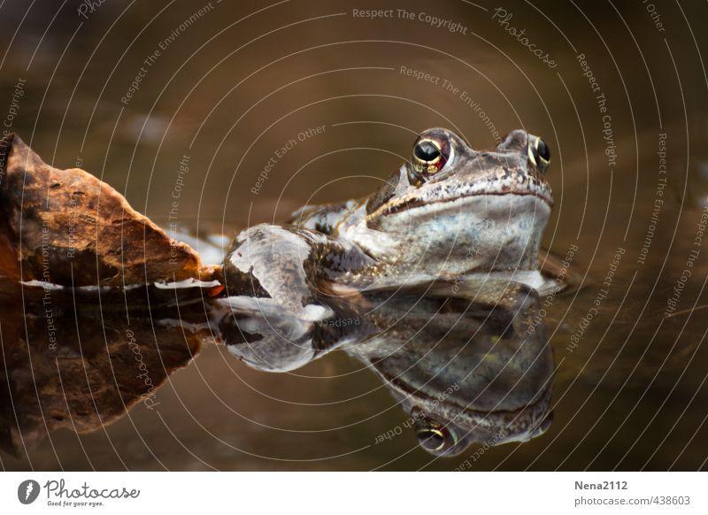 Herbstfarbig... Umwelt Natur Wasser Sommer Blatt Garten Park Wald Tier Frosch Erholung warten Sonnenbad braun Kröte Krötenwanderung Glätte nass Prinz
