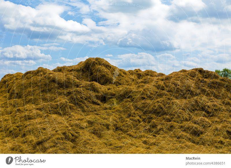 Heuhaufen auf einem Feld, Niedersachsen, Deutschland Acker Am Tag Aussenaufnahme Bauernhof Himmel Natur Landwirtschaft Landwirtschaftliches Produkt Sommer