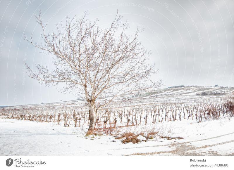 Winter am Weinberg blau Baum Erholung Landschaft Einsamkeit Wolken ruhig Tier kalt Schnee braun Eis Hügel Frost