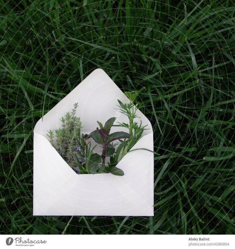 Verschiedene Kräuter im Briefumschlag Kräutergarten grün Außenaufnahme Gras Farbfoto Garten Natur frisch Pflanze Sommer