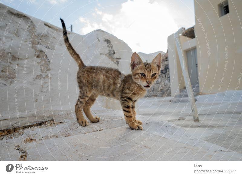 junge Katze niedlich klein Katzenbaby bezaubernd Textfreiraum Santorin Menschenleer Altstadt