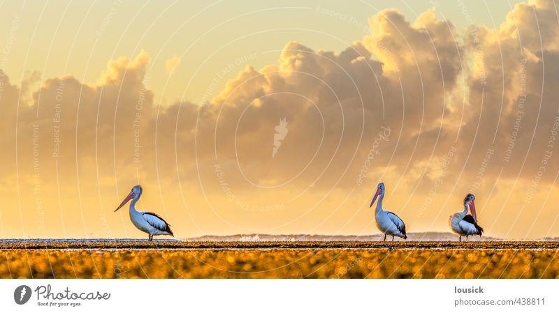 Natur Ferien & Urlaub & Reisen schön Sommer Sonne Meer Landschaft Wolken Tier Strand Umwelt Frühling Herbst Küste Vogel Wetter