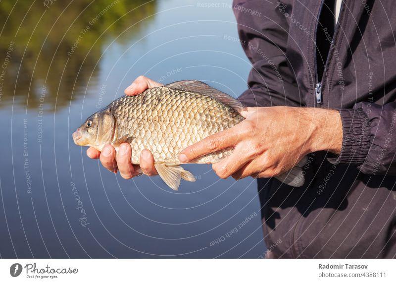 Angler hält Karpfen fangen Fisch Tier Beteiligung Natur Wasser Süßwasser Flosse Hobby Kopf Fluss Fischer Mann Kruzianer Hand groß Tierwelt Mund Licht im Freien