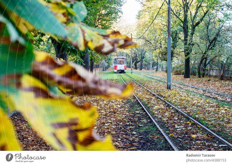 Straßenbahnfahrten auf Schienen im Herbst Eisenbahn urban rot Baum Tourismus Bahn Natur retro Verkehr reisen Landschaft Schönheit Weg schön Saison natürlich