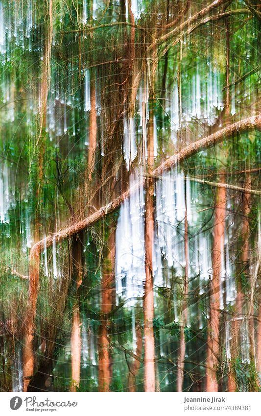 abstraktes Waldgeschehen Bäume Natur Landschaft Umwelt Pflanze Holz chaotisch Baum Forstwirtschaft Klima Klimawandel Abholzung Zerstörung Baumstamm Waldsterben