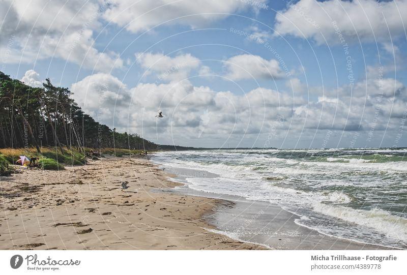 Weststrand Darß Fischland-Darß-Zingst Strand Ostsee Küste Wellen Wasser Meer Sand Bäume Wald Himmel Wolken Wind Sonne Natur Landschaft Möwe