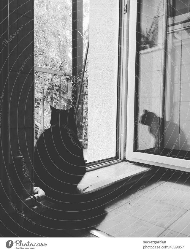 Auf der Lauer, auf der Schwelle... Katze Balkon Balkontür Sehnsucht Küche Fliesen Innenaufnahme Innenraum Außenraum Frischluft gucken beobachten Haustier