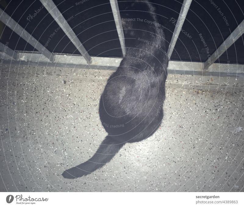 Nachts sind alle Katzen schwarz Trash Balkon Geländer Brüstung Vogelperspektive Hauskatze neugierig Neugier Abend Fussboden Sprenkel Gitter vergittert Gefängnis
