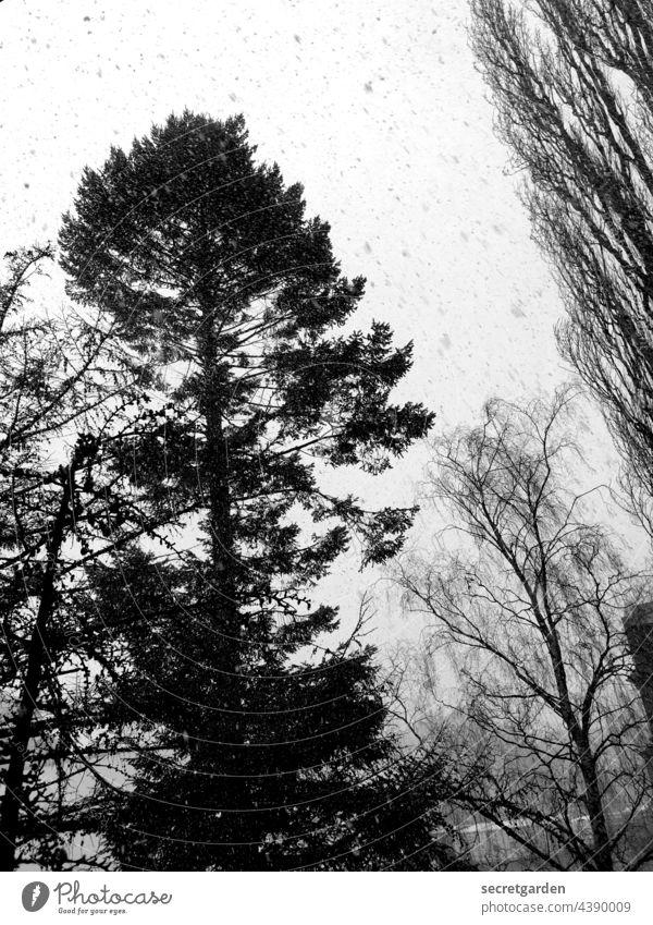 Buntes Schneetreiben Schwarzweißfoto Bäume Baum Schneeflocke Winter Schneefall kalt Außenaufnahme Natur grau Menschenleer schwarz Wetter Umwelt