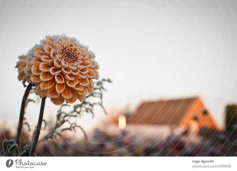 Frostfeld Umwelt Natur Landschaft Pflanze Winter Klima Wetter Eis Blume Blüte Grünpflanze Wiese Menschenleer Haus Einfamilienhaus kalt natürlich Idylle