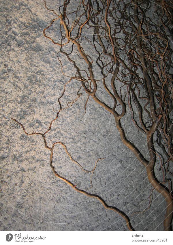 Schattenwurf U-Bahn Paris Beton Untergrund Putz Wand London Underground Fototechnik Beleuchtung Verbindung Ast concrete shadow plaster limb Mauer