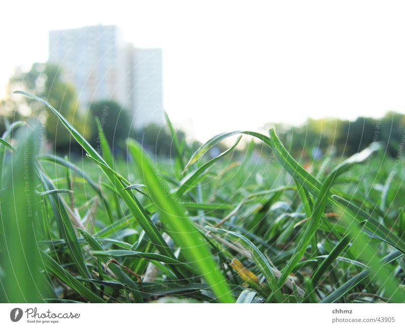 Halme Gras Wiese grün Hochhaus Unschärfe Froschperspektive Makroaufnahme worm's-eye view