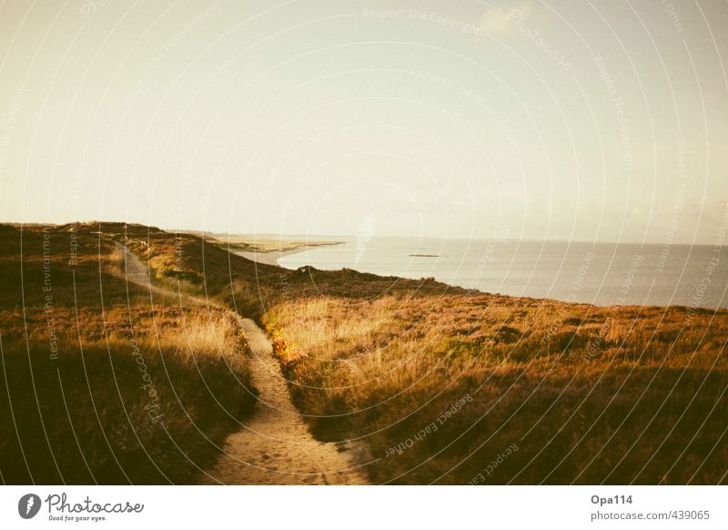 Long Way Umwelt Natur Landschaft Pflanze Tier Himmel Sonne Sommer Klima Wetter Schönes Wetter Gras Sträucher Grünpflanze Nutzpflanze Wellen Küste Seeufer