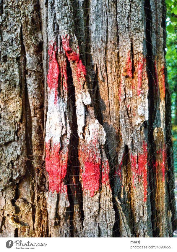 Wanderwegmarkierung an einem Baum rot-weiß-rot mehrfarbig wandern Natur Wege & Pfade Ferien & Urlaub & Reisen Wanderzeichen Wegweisend Schilder & Markierungen