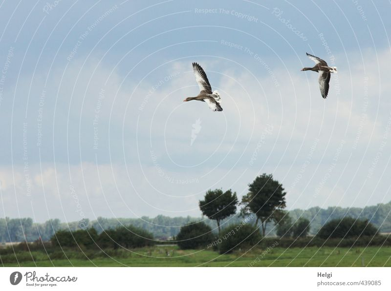 Landeanflug... Himmel Natur blau grün weiß Pflanze Sommer Baum Landschaft Tier Umwelt Wiese Leben Bewegung Gras grau
