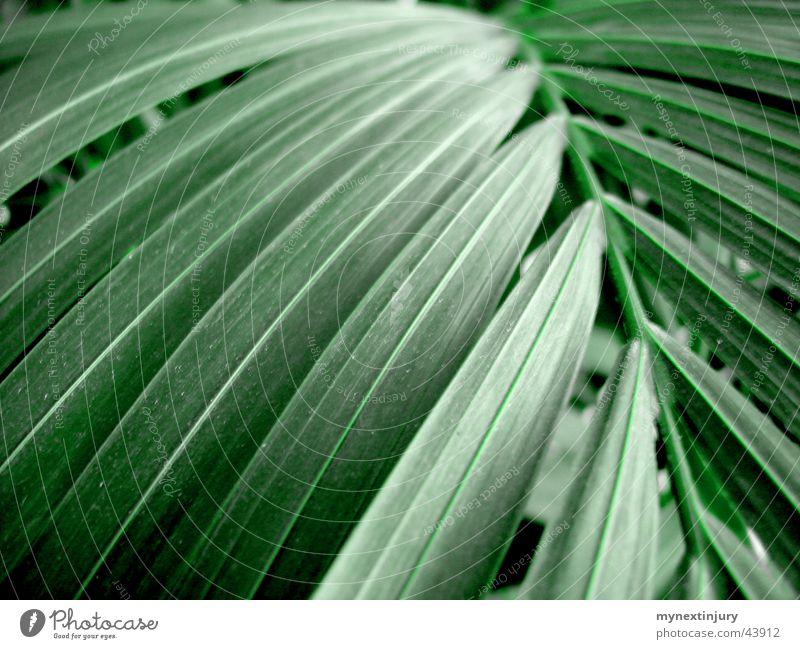 Grünzeug in Palmenform grün Blatt Farbe Hintergrundbild Grünpflanze