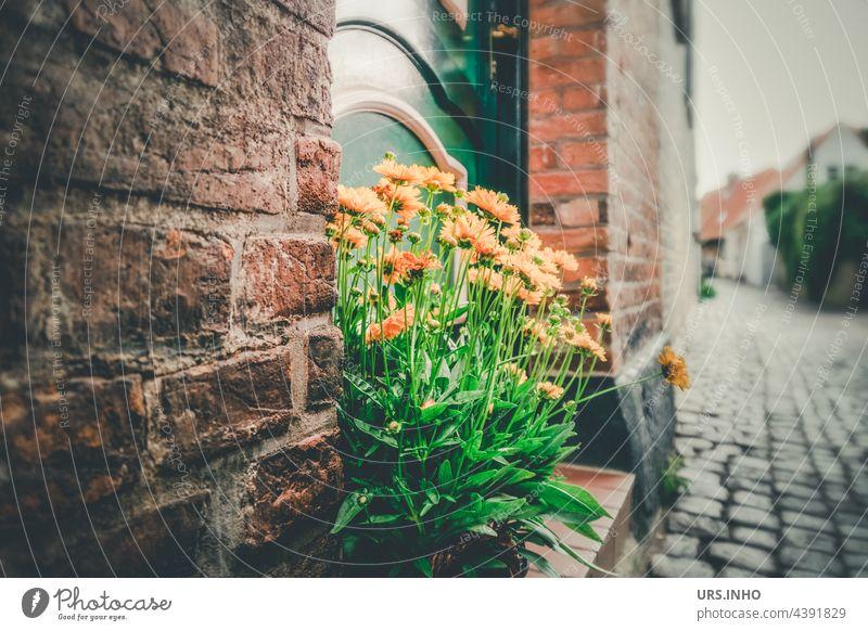 gelbe Blumen als Dekoration vor der Haustür in einer Altstadtgasse vintage retro Farbfoto alt Backstein Kopfsteinpflaster