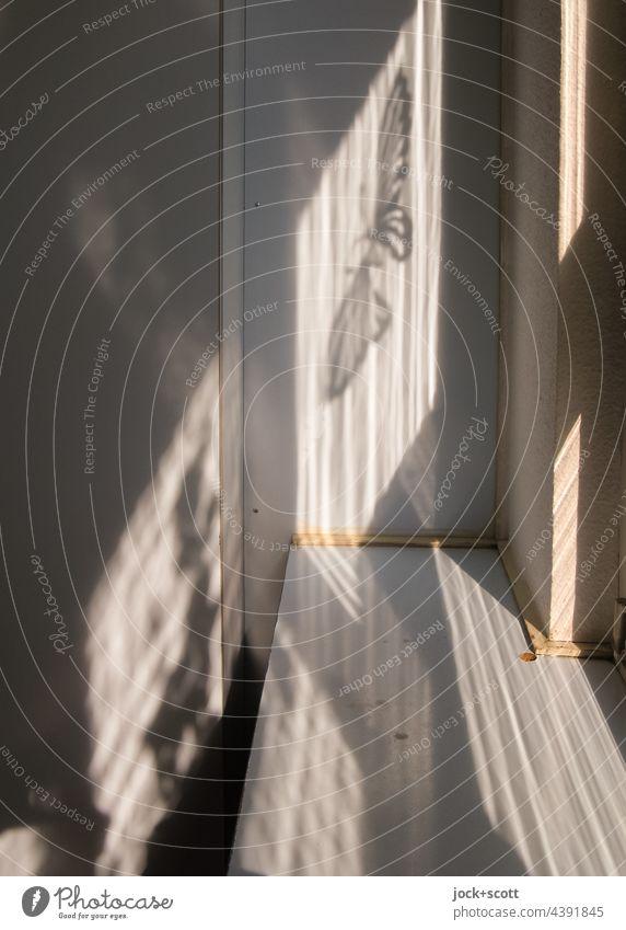 Schmetterling Silhouette zwischen Licht und Schatten Fensterbrett Fensterleibung Kontrast Sonnenlicht dazwischen Wand Strukturen & Formen Streifen Linie