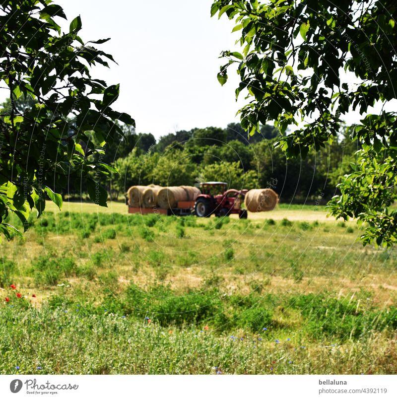 Heute gibts Stoh, frisch vom Traktor. Träcker Landwirtschaft Natur Feld Farbfoto Umwelt Außenaufnahme Landschaft Arbeit & Erwerbstätigkeit Forstwirtschaft Tag