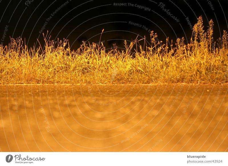 Gras by Night schwarz Straße Lampe dunkel Feld gold Halm glühen