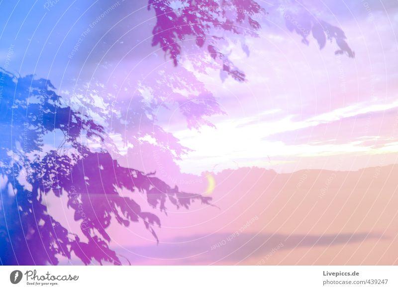 Blaubaum Himmel Natur blau Pflanze Sommer Baum Landschaft Wolken Blatt Umwelt Holz Kunst rosa Feld leuchten verrückt