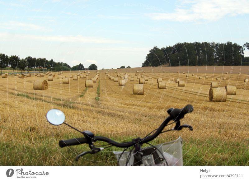 jede Menge gerollte Strohballen auf einem Feld am Rande des Radweges Acker Rolle Ernte Erntezeit Fahrrad Fahrradlenker Landwirtschaft Landschaft Baum Sommer