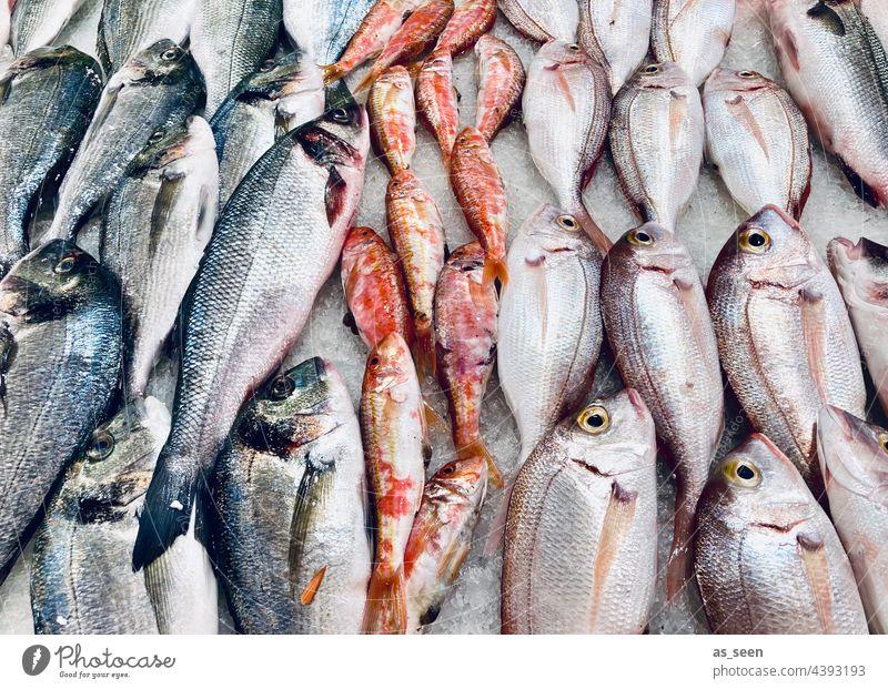 Frischer Fisch Markt frisch Marseille glänzend Hering Sprotten orange blau grau weiß Lebensmittel Farbfoto Ernährung Tier Totes Tier Menschenleer Fischmarkt