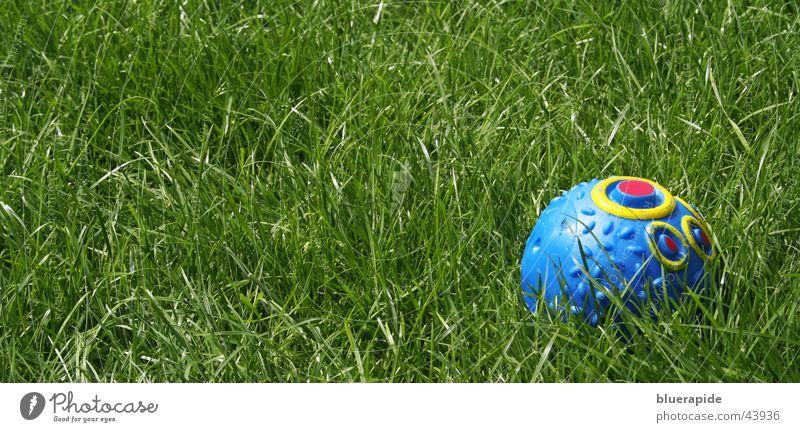 Sein liebstes Spielzeug Hundespielzeug Gras grün Wiese Spielen Freizeit & Hobby Ball mehrfarbig blau Statue