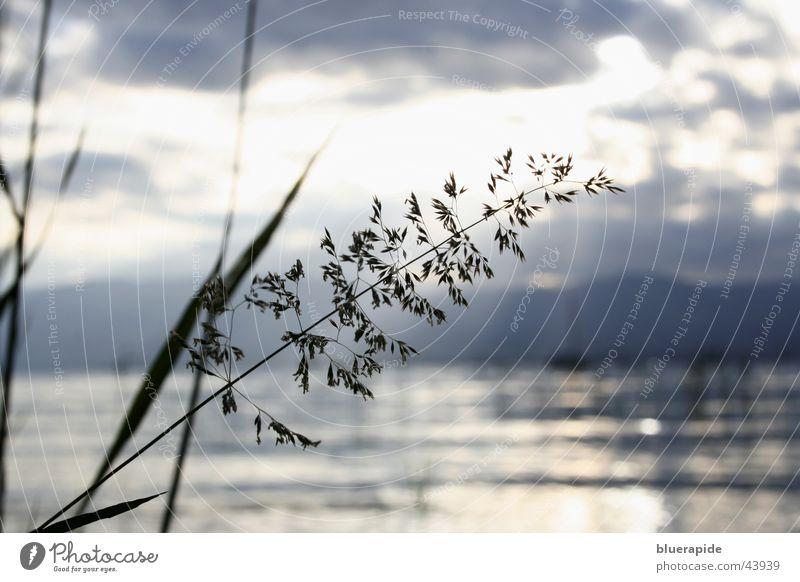 Seeblick Wolken Schilfrohr Halm Hügel Wellen Reflexion & Spiegelung Wasser