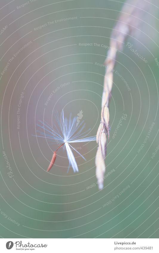 ...fest hängen Umwelt Natur Pflanze Gras Sträucher fangen ästhetisch dünn elegant klein niedlich Wärme grün Vorsicht Gelassenheit geduldig Farbfoto