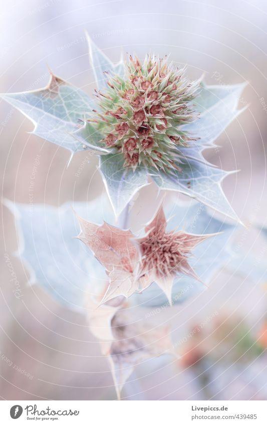 Pflanze am Strand Natur Pflanze Blume Blatt Umwelt Blüte natürlich Park Blühend Duft eckig Grünpflanze Wildpflanze