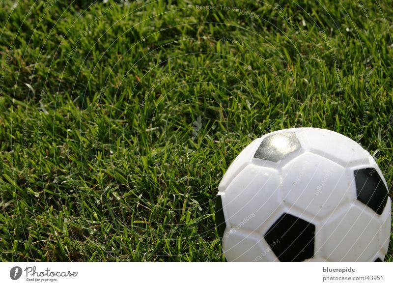 Kick me! Freizeit & Hobby Spielen Ball Gras Wiese Leder Spielzeug rund unten grün schwarz weiß Hundespielzeug rechts Rasen kariert Fußball Farbfoto