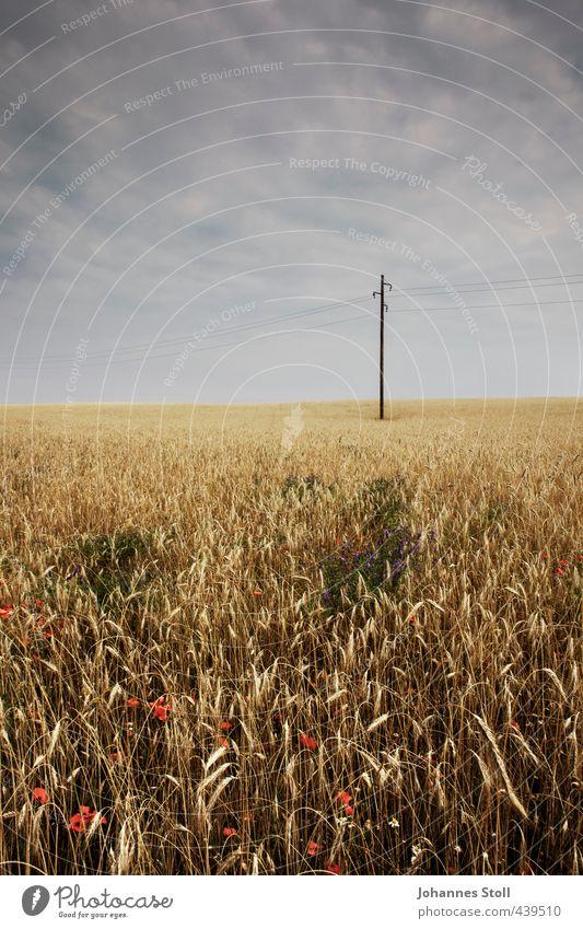 Kornfeld Ferien & Urlaub & Reisen Einsamkeit Landschaft gelb dunkel Umwelt Feld Energiewirtschaft bedrohlich Landwirtschaft Netzwerk Ernte Strommast nachhaltig