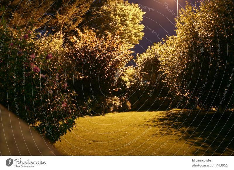 My Garden is my Nightlife Nacht dunkel glänzend Mauer Gras Baum Sträucher Laterne Straßenbeleuchtung Langzeitbelichtung Garten gold Rasen Himmel Farbe