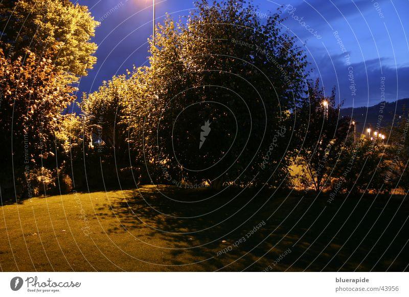 Garden by Night Himmel Baum blau Blatt Wolken dunkel Garten gold Rasen geheimnisvoll mystisch Birke