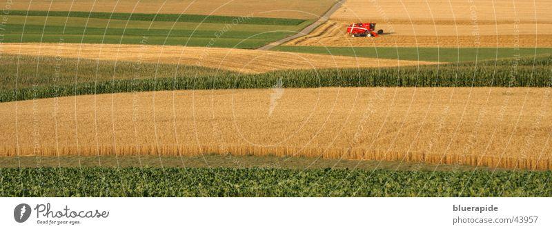 Heute ist Erntetag im Feld gelb gold grün rot Weizen Weizenfeld Mähdrescher Getreide goldgelb Pflanze Sommer Landwirtschaft Farbfoto Außenaufnahme Tag
