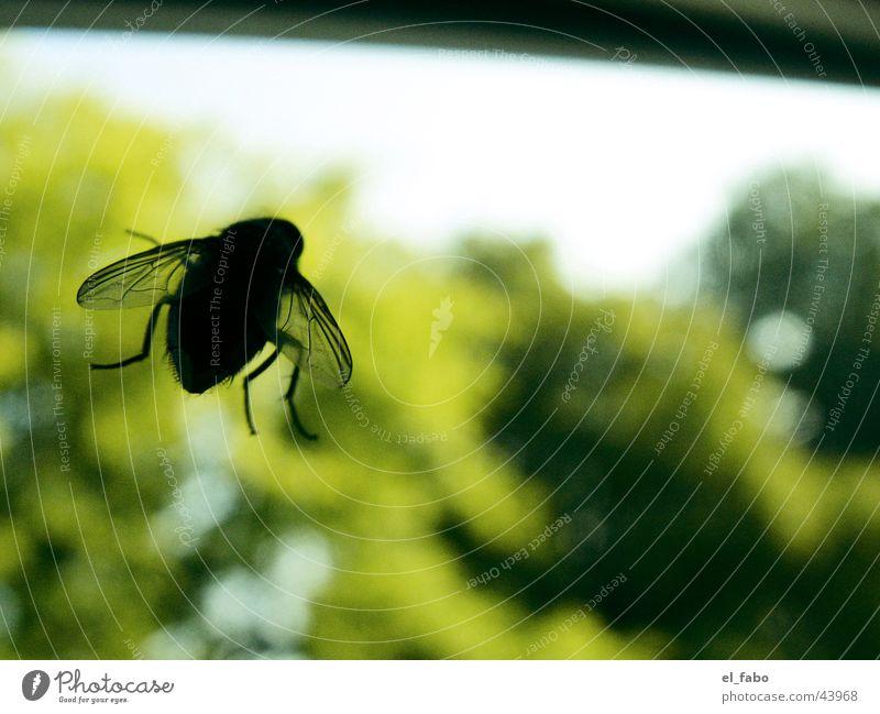 U.F.O. Baum Fenster Fliege Aussicht Fensterscheibe