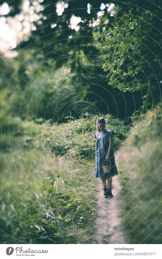 Mädchen mit Korb allein im Wald blaues Kleid einsam traurig Traurigkeit Einsamkeit Stille im Wald stumm wandernd Kindheit verirrt Ruhe Tageslicht Stimmung