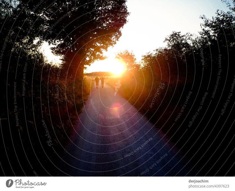 Durch diesen Weg, führt der Nachhauseweg die zwei Wanderer nehmen,  beim Sonnenuntergang. sonnenuntergang Landschaft Natur Wald baum Sommer büsche